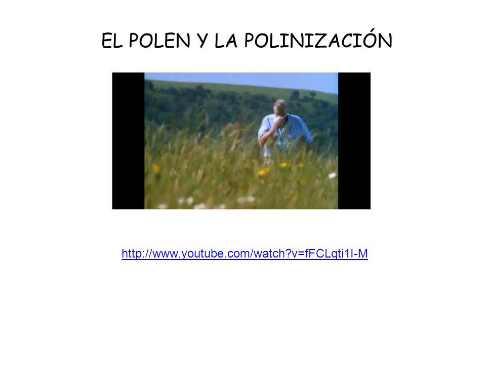 EL POLEN Y LA POLINIZACIÓN