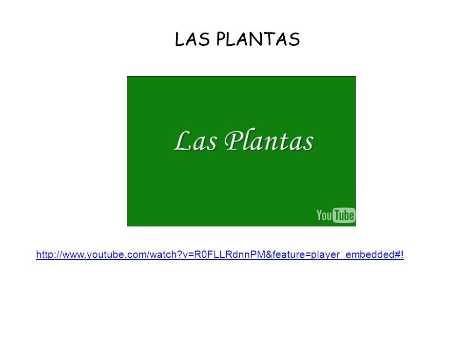 LAS PLANTAS http://www.youtube.com/watch v=R0FLLRdnnPM&feature=player_embedded#!
