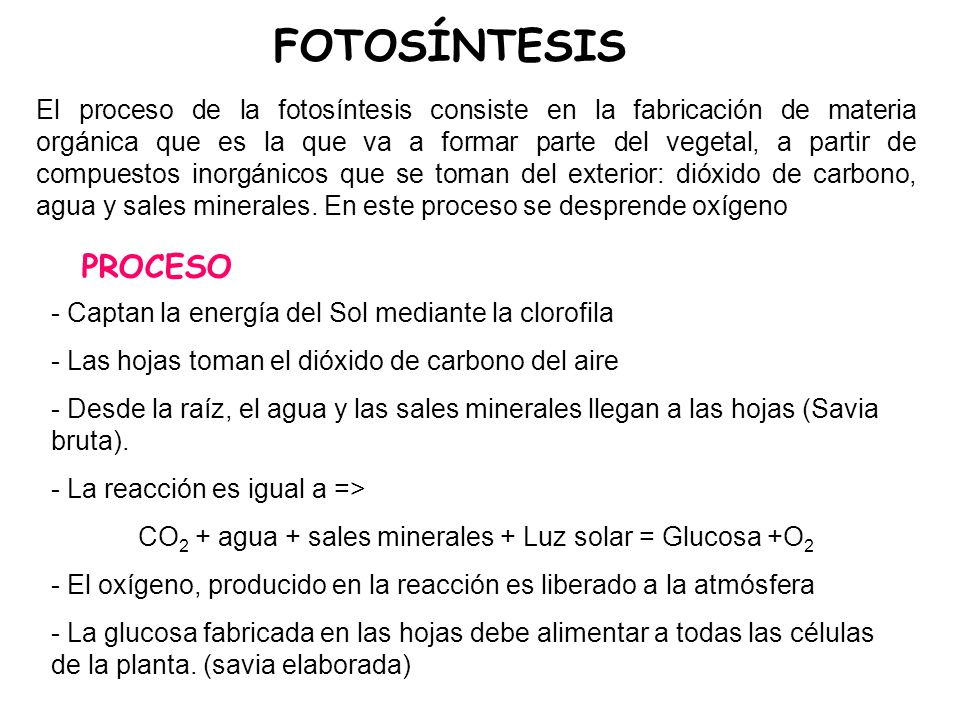 CO2 + agua + sales minerales + Luz solar = Glucosa +O2