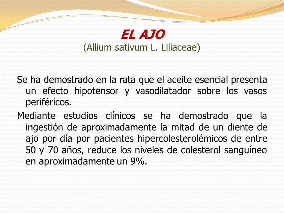 EL AJO (Allium sativum L. Liliaceae)