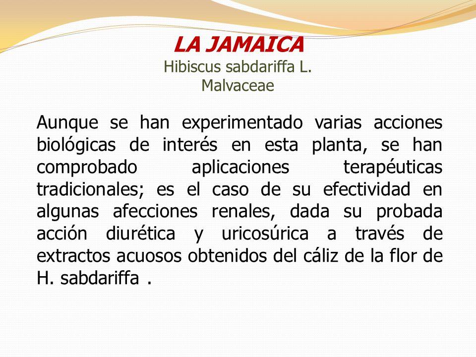 LA JAMAICA Hibiscus sabdariffa L. Malvaceae