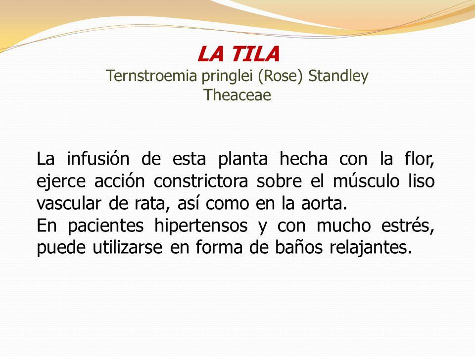 LA TILA Ternstroemia pringlei (Rose) Standley Theaceae