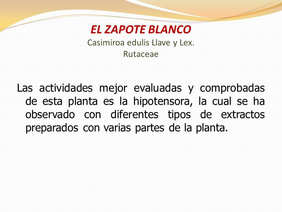 EL ZAPOTE BLANCO Casimiroa edulis Llave y Lex. Rutaceae
