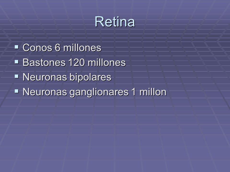 Retina Conos 6 millones Bastones 120 millones Neuronas bipolares