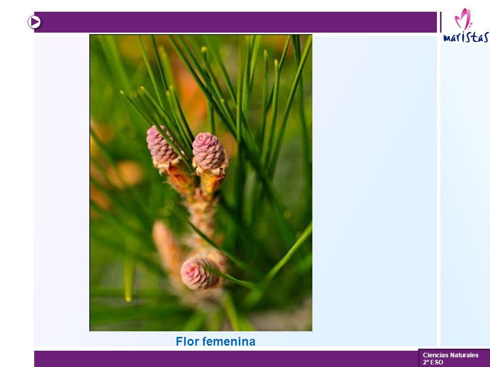 Flor femenina Ciencias Naturales 2º ESO