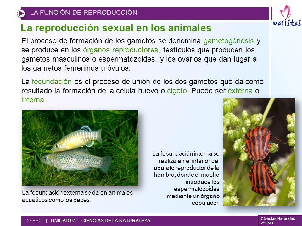 La reproducción sexual en los animales