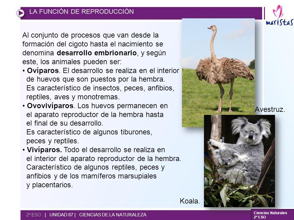 este, los animales pueden ser: