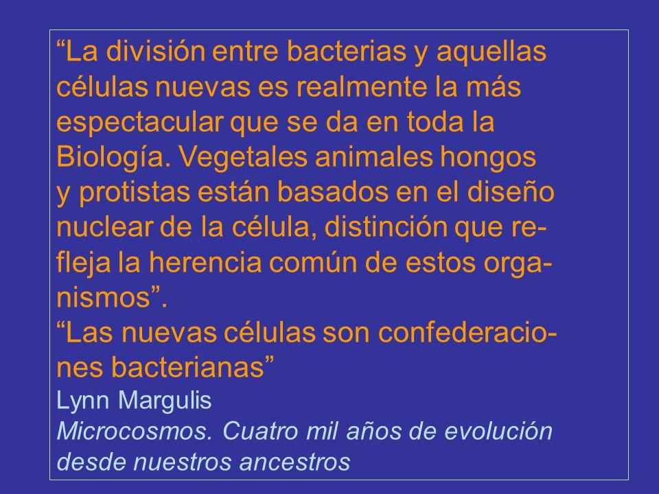 La división entre bacterias y aquellas