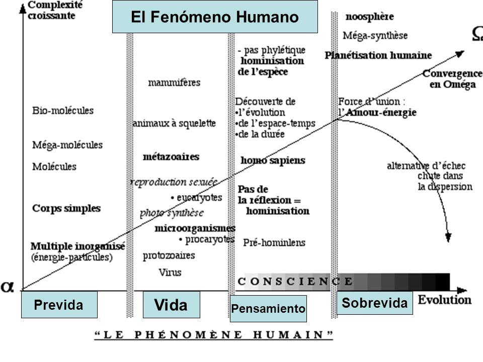 El Fenómeno Humano Vida