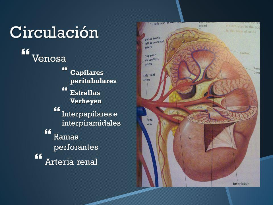 Lujoso Pecho Anatomía Venosa Ideas - Imágenes de Anatomía Humana ...