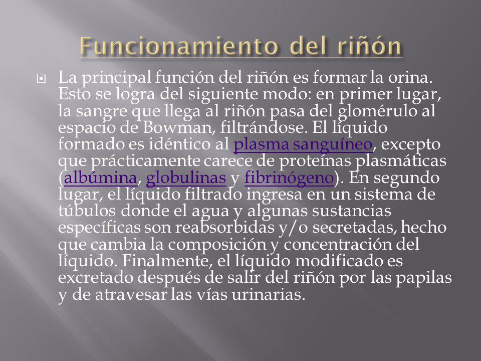 Funcionamiento del riñón