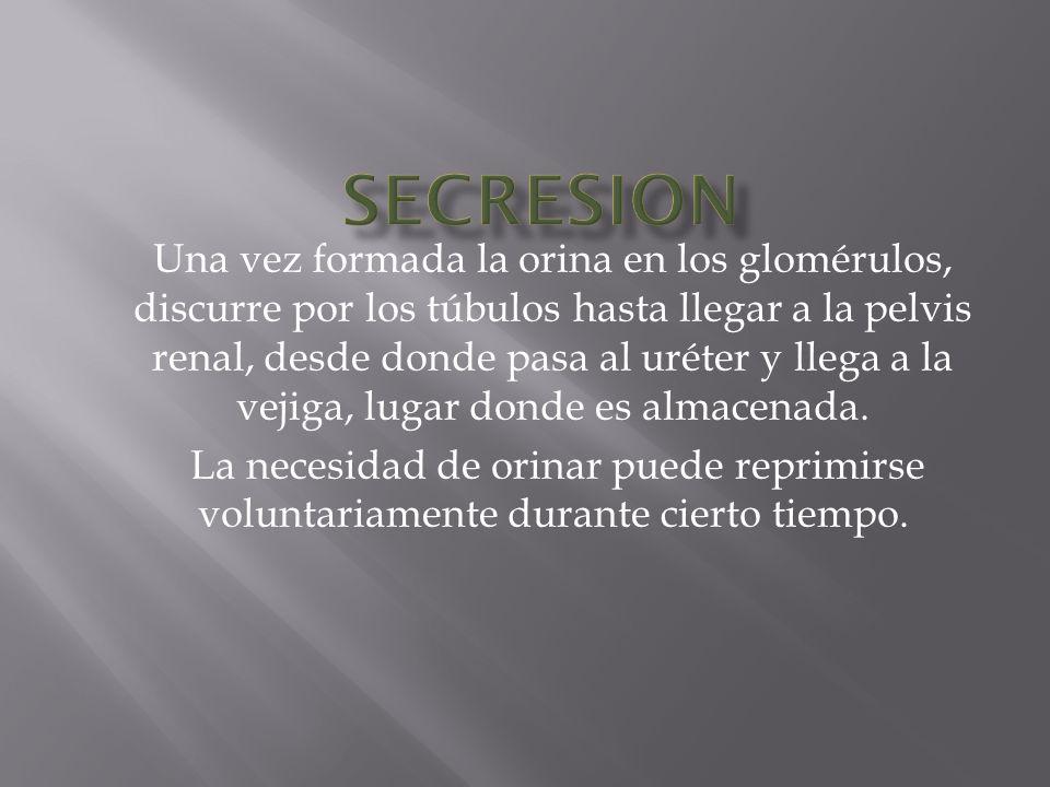 SECRESION