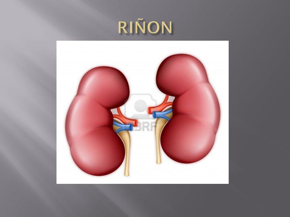 RIÑON