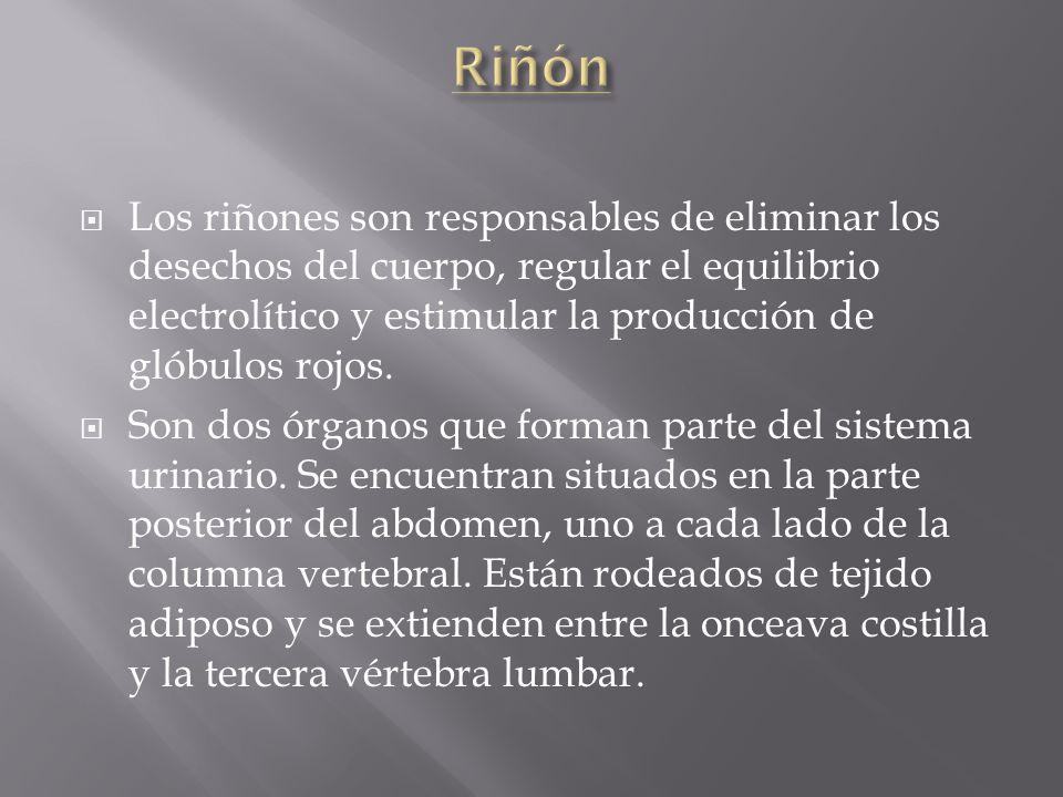Riñón