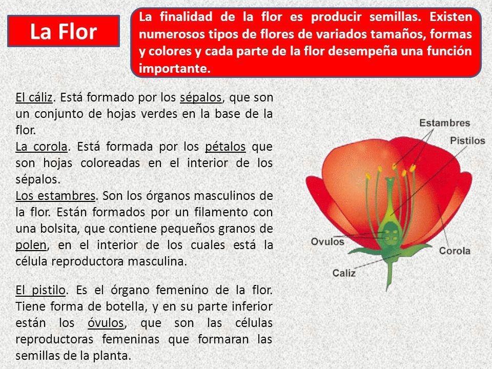 La finalidad de la flor es producir semillas