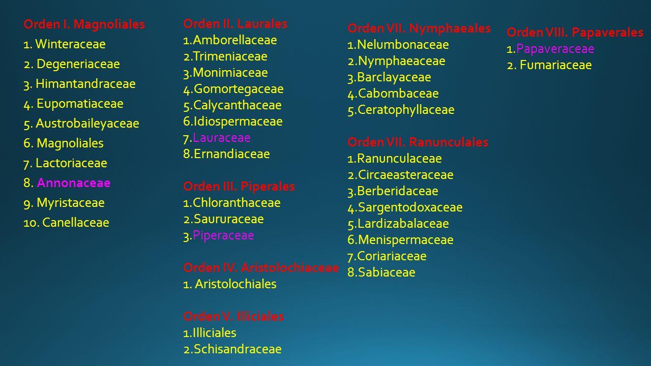 Orden II. Laurales 1.Amborellaceae. 2.Trimeniaceae. 3.Monimiaceae. 4.Gomortegaceae. 5.Calycanthaceae.