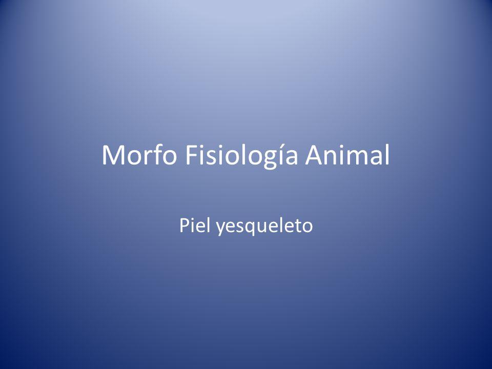 Morfo Fisiología Animal