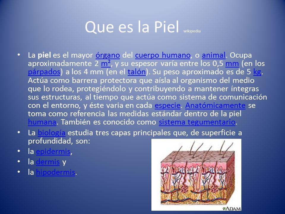 Contemporáneo Anatomía De La Piel Wikipedia Adorno - Imágenes de ...