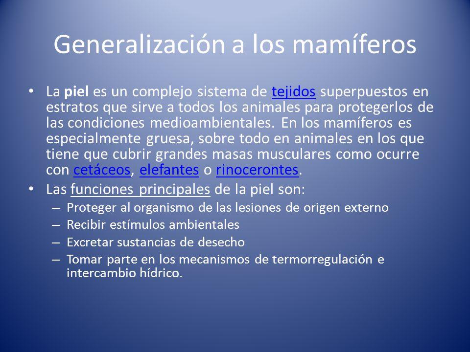 Generalización a los mamíferos