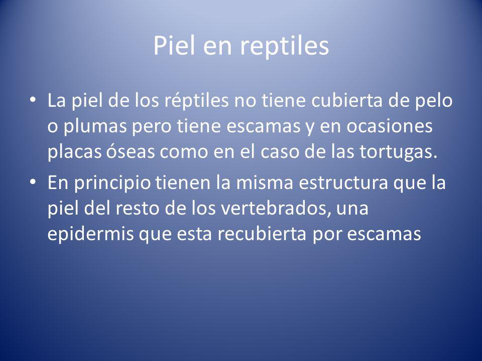 Piel en reptiles