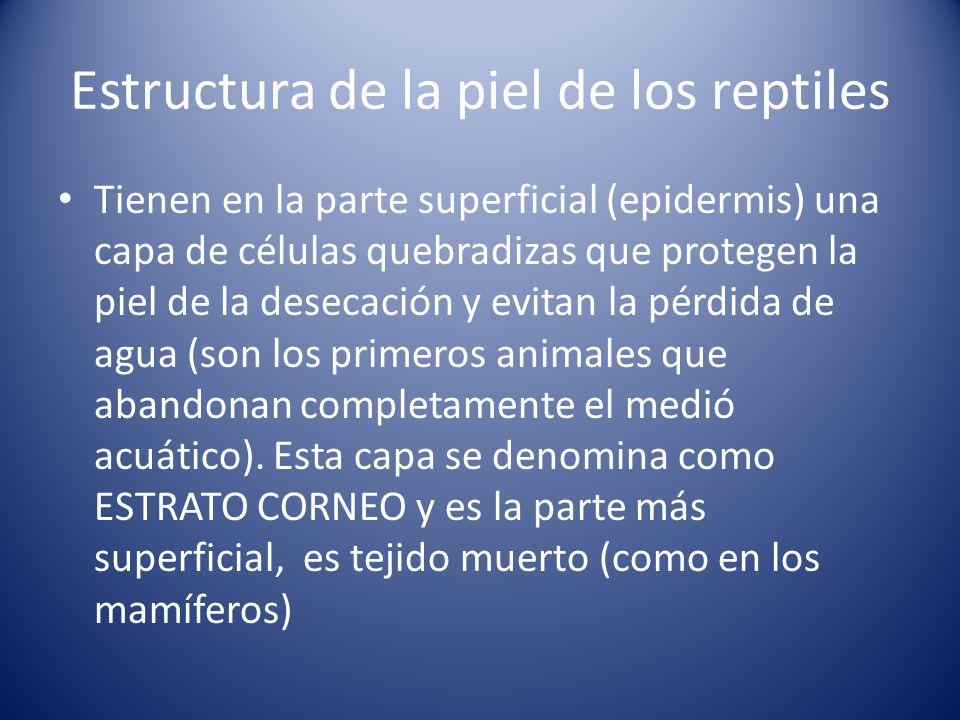 Estructura de la piel de los reptiles