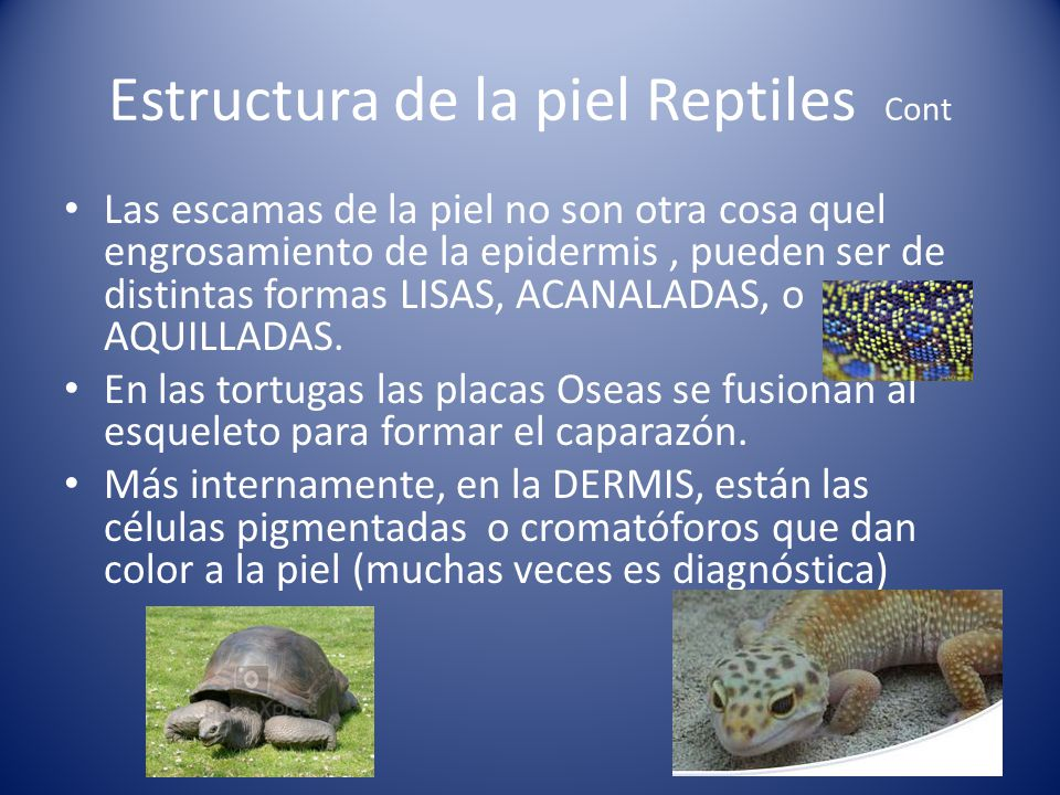 Estructura de la piel Reptiles Cont
