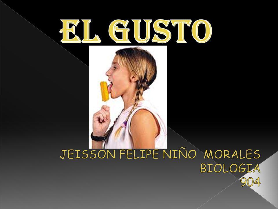 JEISSON FELIPE NIÑO MORALES BIOLOGIA 904