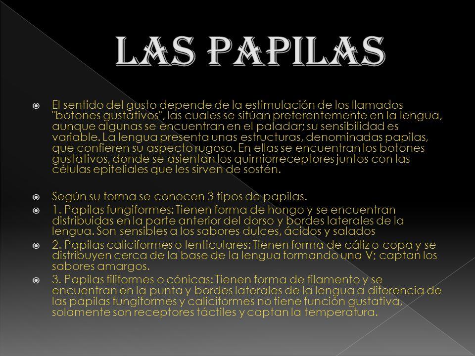 LAS PAPILAS