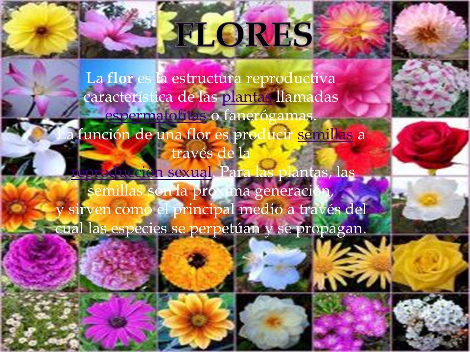 La función de una flor es producir semillas a través de la