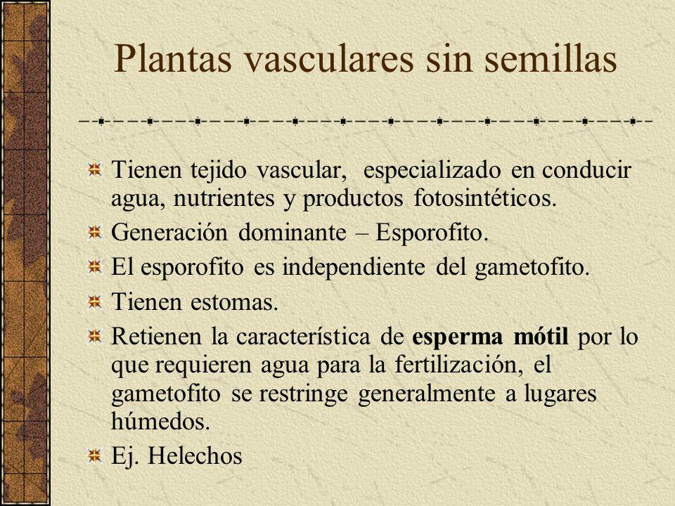 Plantas vasculares sin semillas