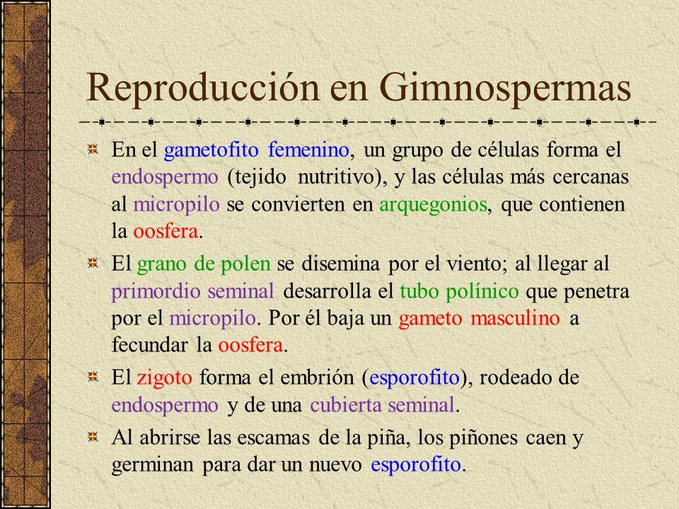 Reproducción en Gimnospermas