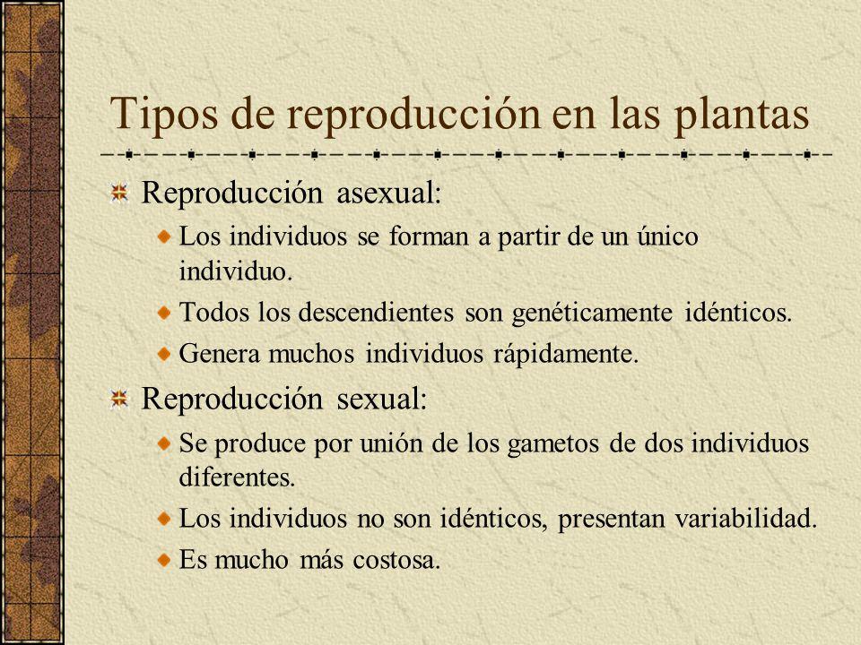 Tipos de reproducción en las plantas