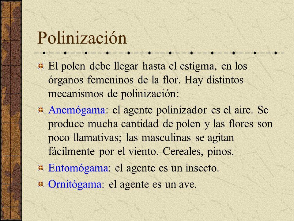 Polinización El polen debe llegar hasta el estigma, en los órganos femeninos de la flor. Hay distintos mecanismos de polinización: