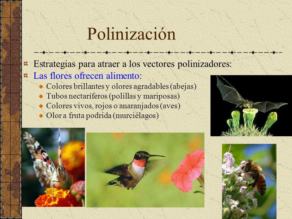 Polinización Estrategias para atraer a los vectores polinizadores: