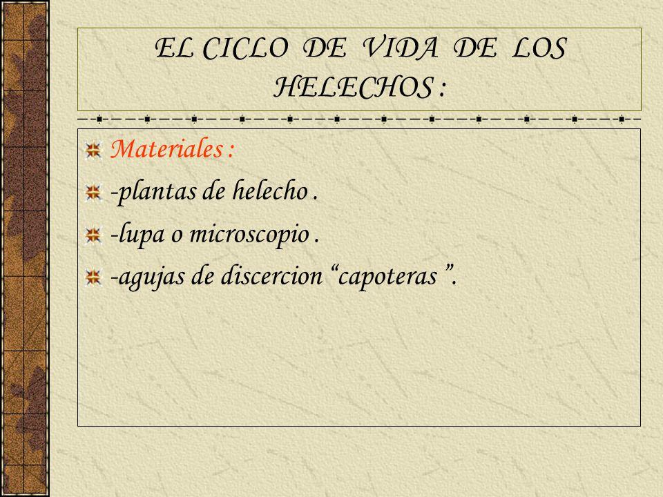 EL CICLO DE VIDA DE LOS HELECHOS :