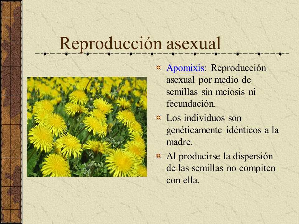 Reproducción asexual Apomixis: Reproducción asexual por medio de semillas sin meiosis ni fecundación.