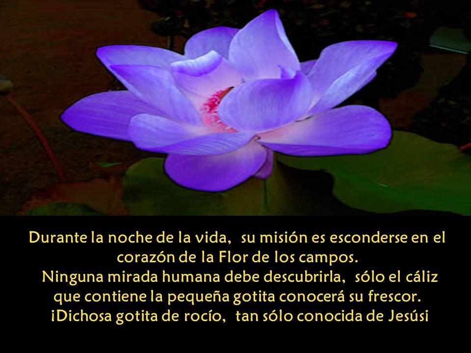 Durante la noche de la vida, su misión es esconderse en el corazón de la Flor de los campos.