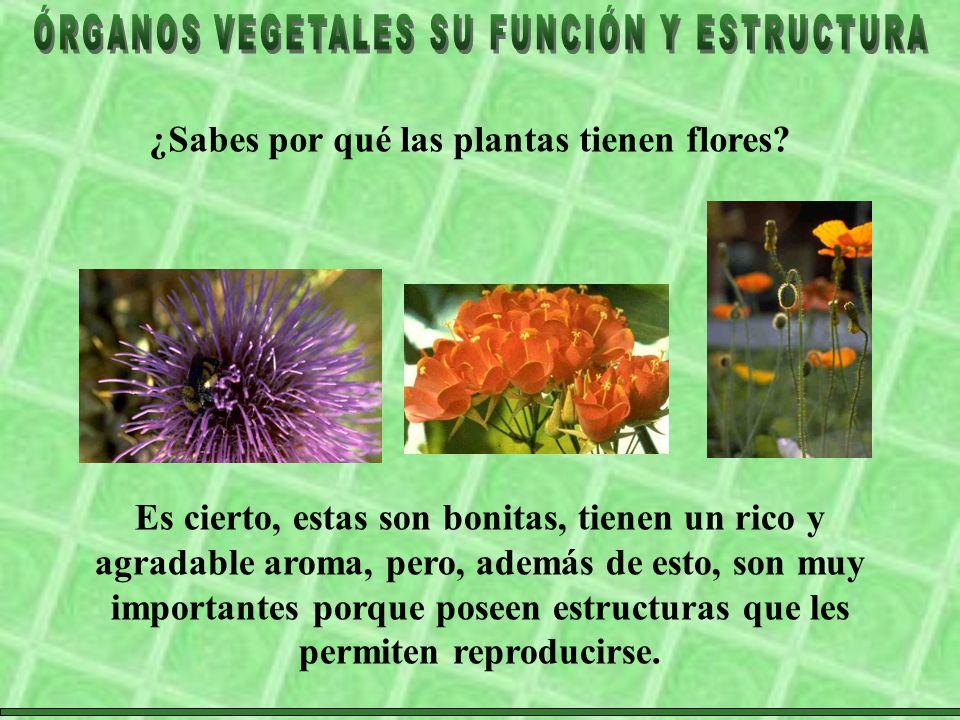 ¿Sabes por qué las plantas tienen flores
