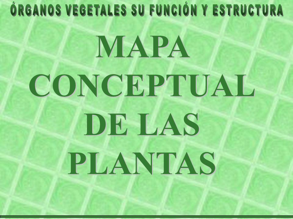 MAPA CONCEPTUALDE LAS PLANTAS