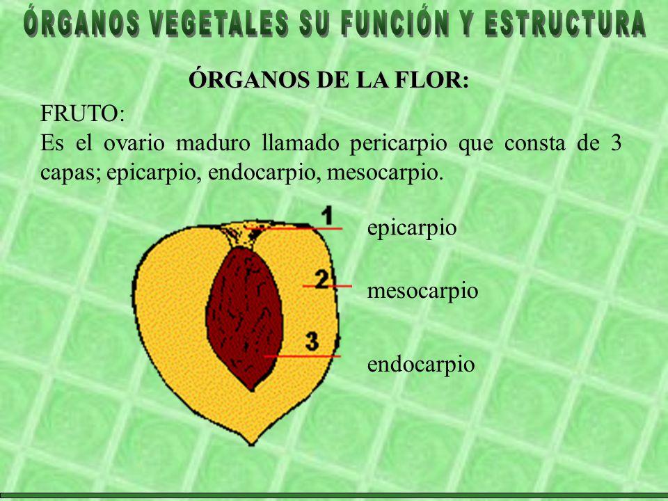ÓRGANOS DE LA FLOR: