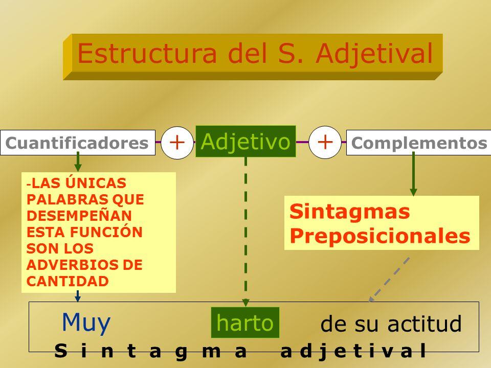 Estructura del S. Adjetival