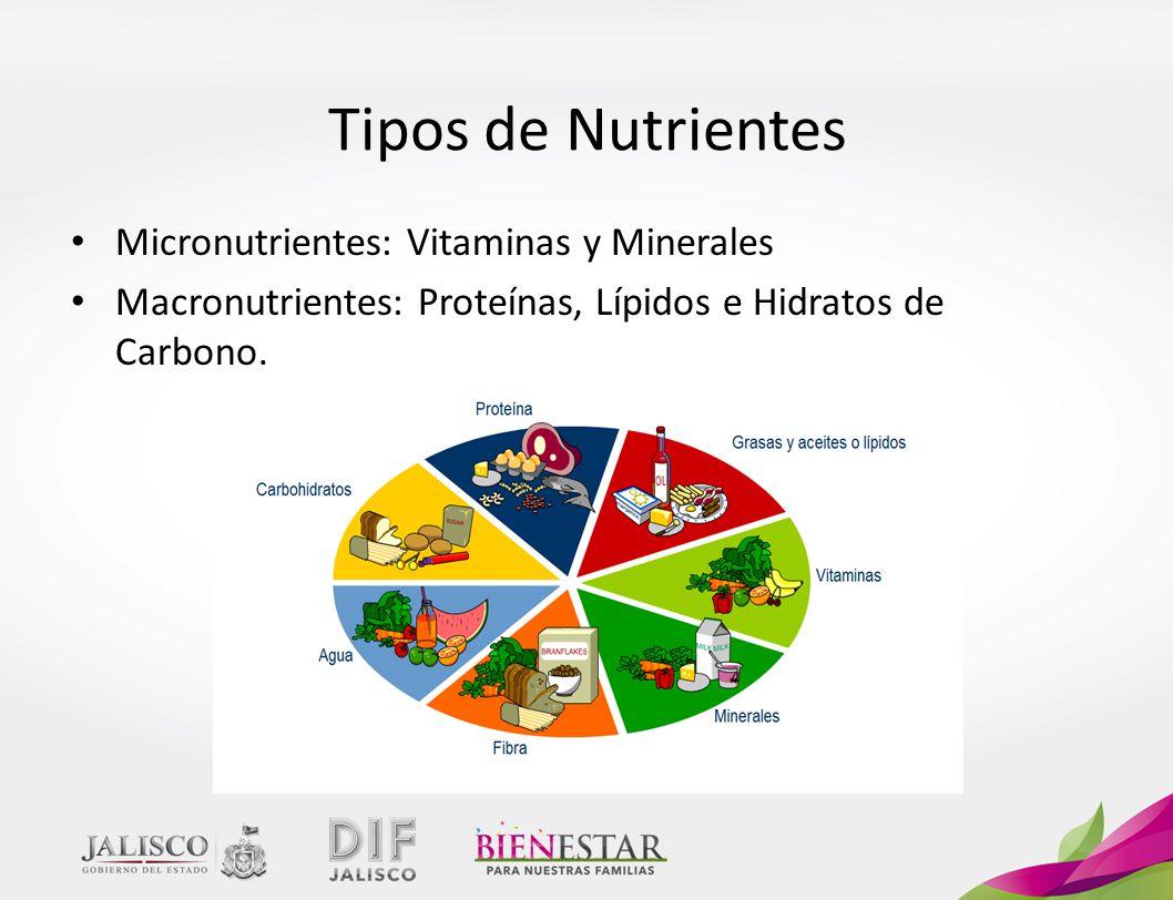 Tipos de Nutrientes Micronutrientes: Vitaminas y Minerales