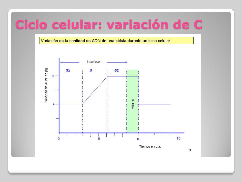 Ciclo celular: variación de C