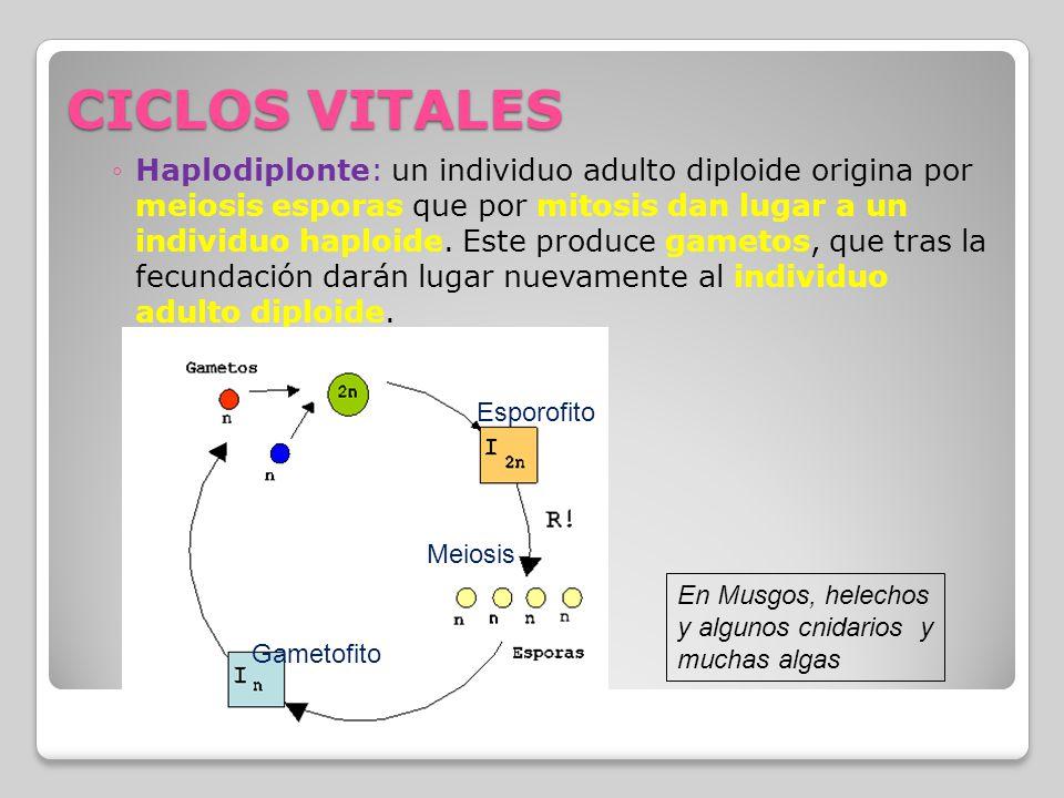 CICLOS VITALES