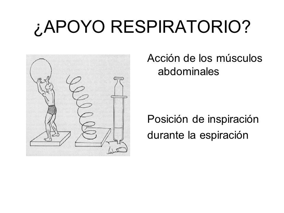 ¿APOYO RESPIRATORIO Acción de los músculos abdominales