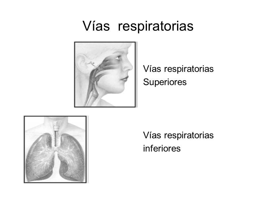 Vías respiratorias Vías respiratorias Superiores inferiores