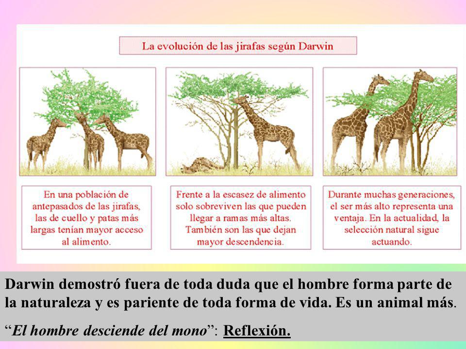 Darwin demostró fuera de toda duda que el hombre forma parte de la naturaleza y es pariente de toda forma de vida. Es un animal más.