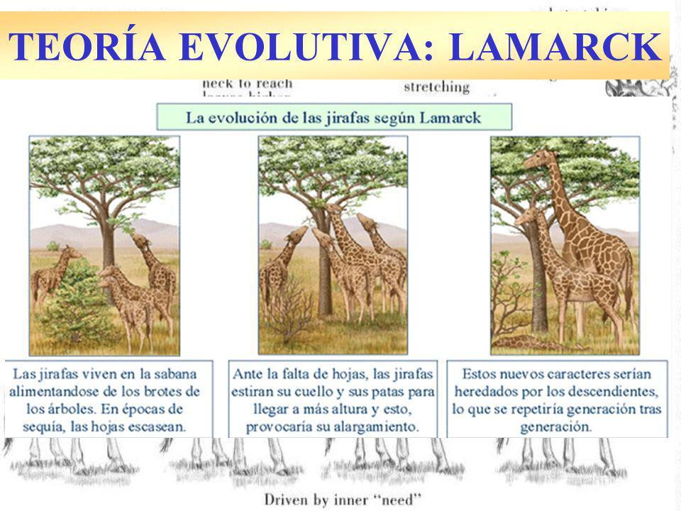 TEORÍA EVOLUTIVA: LAMARCK