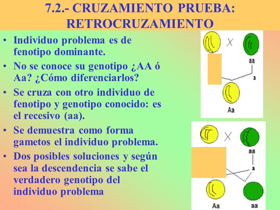 7.2.- CRUZAMIENTO PRUEBA: RETROCRUZAMIENTO