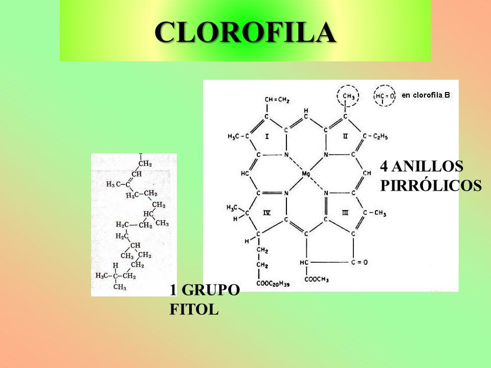 CLOROFILA 4 ANILLOS PIRRÓLICOS 1 GRUPO FITOL